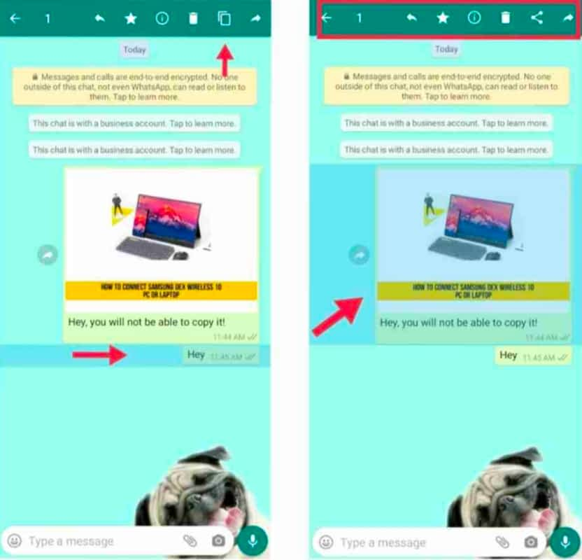 IMG 20210531 234333 Prevent Text Messages from Being Copied on WhatsApp,Stop WhatsApp Text Messages from being Copied